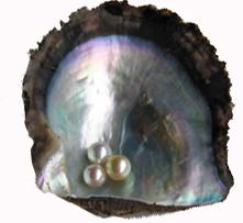 貝釦は真珠の副産物?!