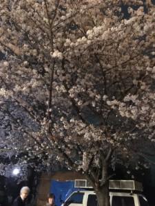伊藤のお花見日記